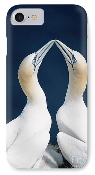 Greeting Northern Gannets Canada IPhone Case by