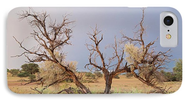 Grey Camelthorn Tree In The Auob Riverbed IPhone Case by Tony Camacho