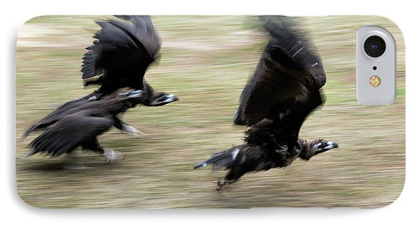 Griffon Vultures Taking Off IPhone Case by Pan Xunbin