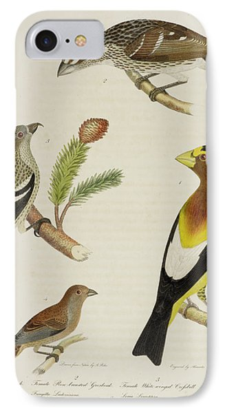 Grosbeak And Crossbill IPhone 7 Case by British Library