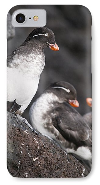 Group Of Parakeet Auklets, St. Paul IPhone Case by John Gibbens