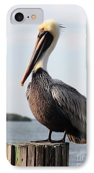 Handsome Brown Pelican IPhone Case by Carol Groenen