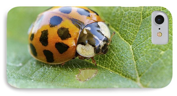 Harlequin Ladybird IPhone Case by Heath Mcdonald