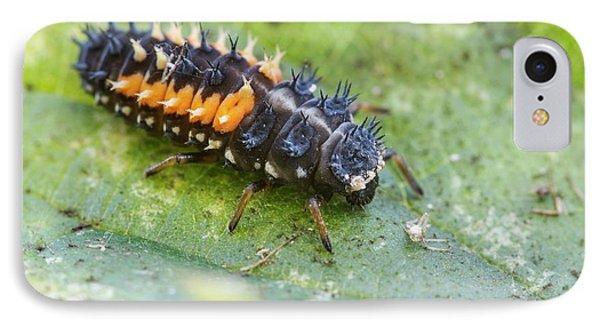 Harlequin Ladybird Larva IPhone Case by Heath Mcdonald