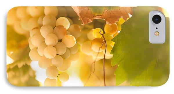 Harvest Time. Sunny Grapes Vi Phone Case by Jenny Rainbow