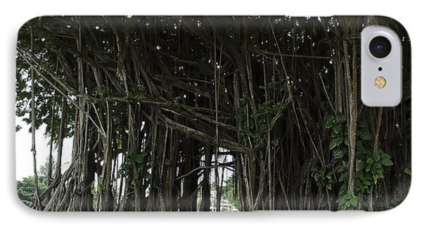 Hawaiian Banyan Tree - Hilo City Phone Case by Daniel Hagerman
