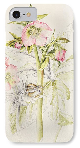 Hellebores IPhone Case by Alison Cooper