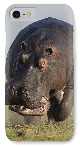 Hippopotamus Bull Charging Botswana IPhone Case by Vincent Grafhorst