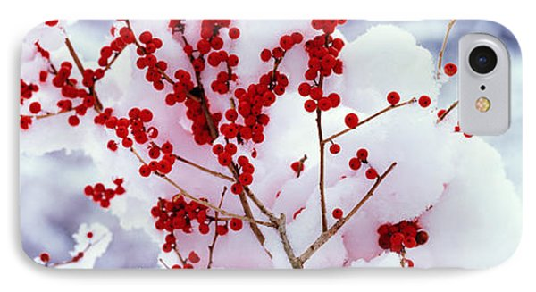 Holly Trees Kyoto Keihoku-cho Japan IPhone Case by Panoramic Images