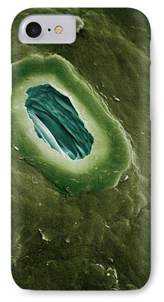 Holm Oak Quercus Ilex Sem Close-up Phone Case by Albert Lleal