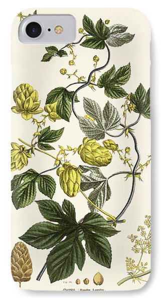 Hop Vine From The Young Landsman IPhone 7 Case by Matthias Trentsensky