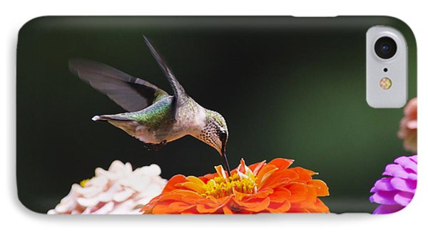 Hummingbird In Flight With Orange Zinnia Flower IPhone Case by Christina Rollo