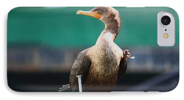 I'm Looking At You Phone Case by Kym Backland