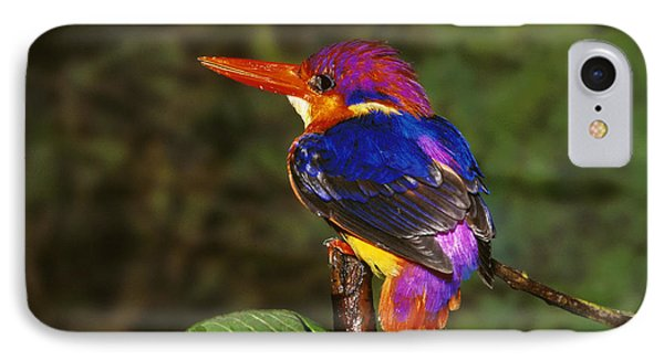 India Three Toed Kingfisher IPhone Case by Anonymous