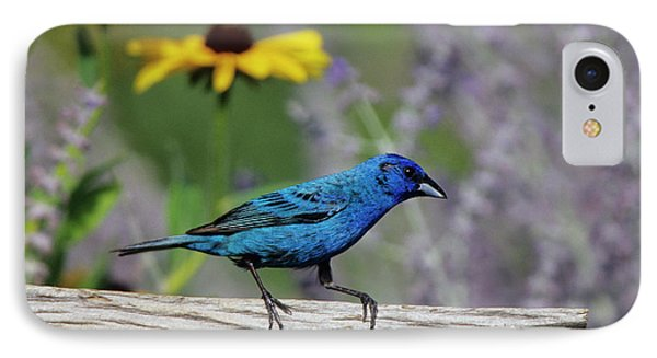 Indigo Bunting (passerina Cyanea IPhone Case by Richard and Susan Day