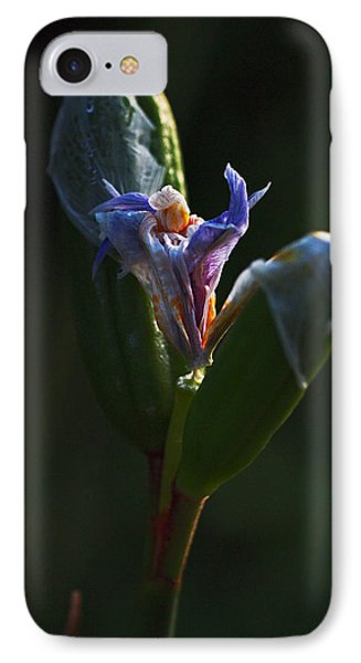 Iris Emerging  IPhone Case by Rona Black