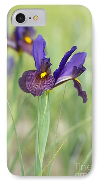 Iris Hollandica 'eye Of The Tiger' IPhone Case by Tim Gainey