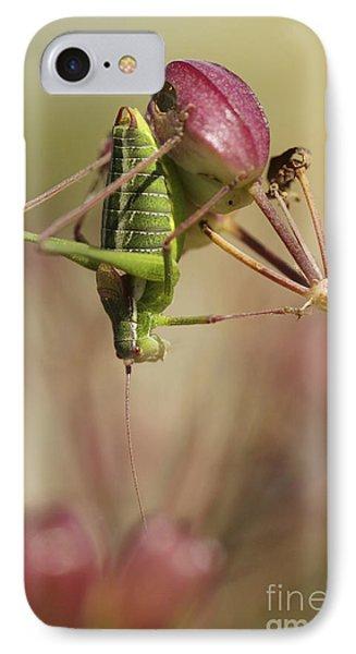 Isophya Savignyi Bush Cricket Phone Case by Alon Meir