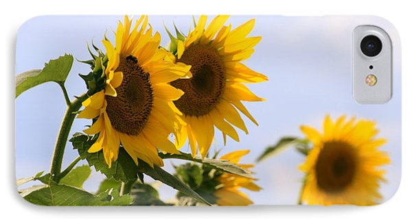 It's A Sunflowery Day IPhone Case by Dorothy Drobney
