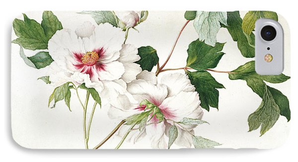 Japanese Tree Peony IPhone Case by  Lucy Cust