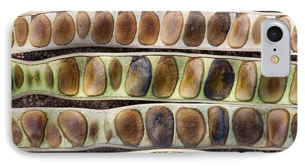 Kassod Tree Seed Pods Pattern Phone Case by Tim Gainey