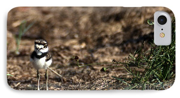 Killdeer Chick IPhone Case by Skip Willits