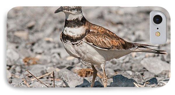 Killdeer Nesting IPhone Case by Lara Ellis