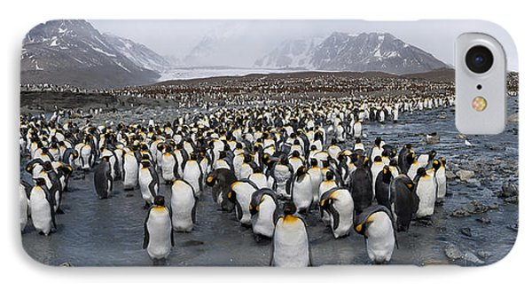 King Penguins Aptenodytes Patagonicus IPhone Case by Panoramic Images