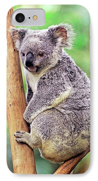 Koala In A Tree IPhone Case by Bildagentur-online/mcphoto-schulz