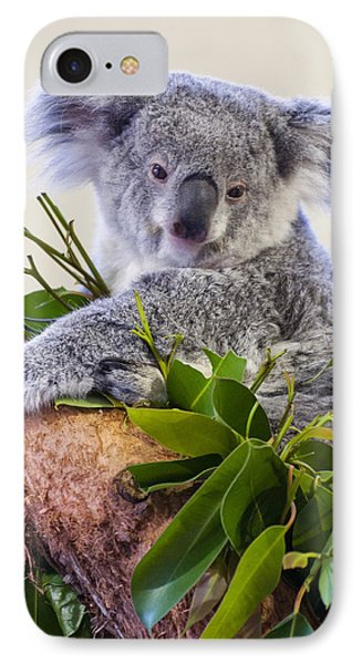 Koala On Top Of A Tree IPhone Case by Chris Flees