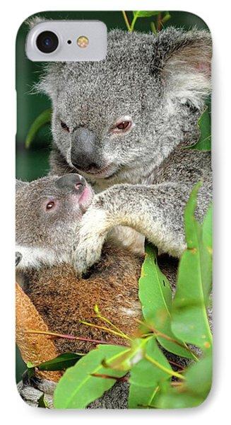 Koalas IPhone 7 Case by Bildagentur-online/mcphoto-schulz