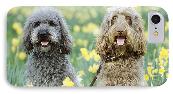 Labradoodles In Daffodils IPhone Case by John Daniels