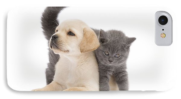Labrador Puppy And Chartreux Kitten IPhone Case by Jean-Michel Labat