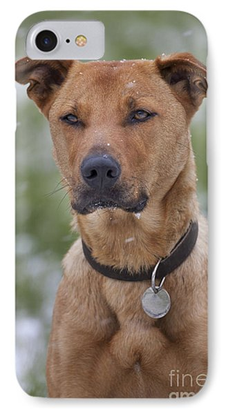 Labradormalinois Mix IPhone Case by Johan De Meester