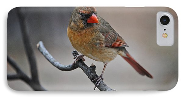 Lady Cardinal Phone Case by Skip Willits