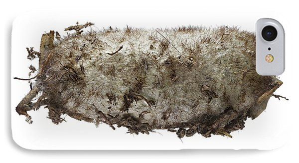 Lappet Moth Pupa IPhone Case by F. Martinez Clavel