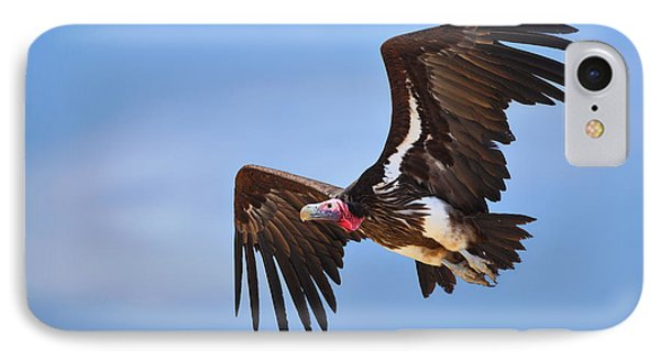 Lappetfaced Vulture IPhone Case by Johan Swanepoel