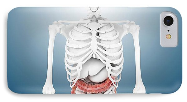 Large Intestine And Skeleton IPhone Case by Springer Medizin