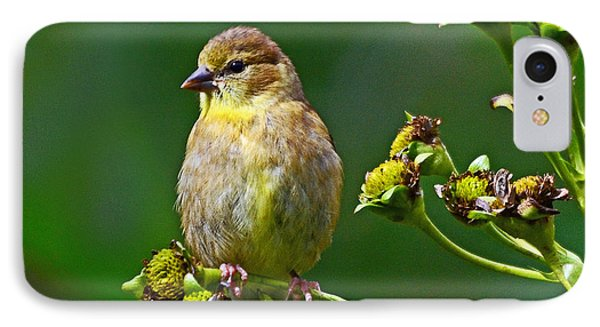 IPhone Case featuring the photograph Late Summer Finch by Rodney Campbell
