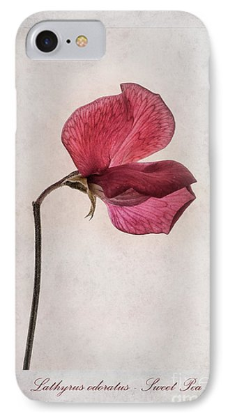 Lathyrus Odoratus - Sweet Pea IPhone Case by John Edwards