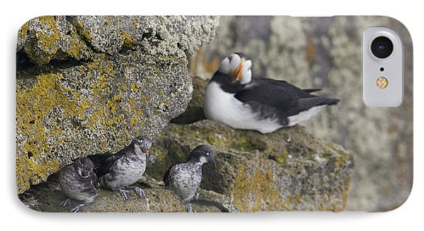 Least Auklets Perched On A Narrow Ledge IPhone Case by Milo Burcham