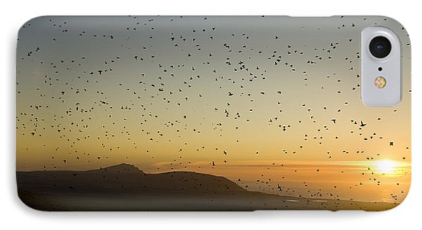 Least Auklets, Returning To Their Nest IPhone Case by Brian Guzzetti