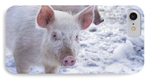 Little Piggies IPhone Case by Edward Fielding