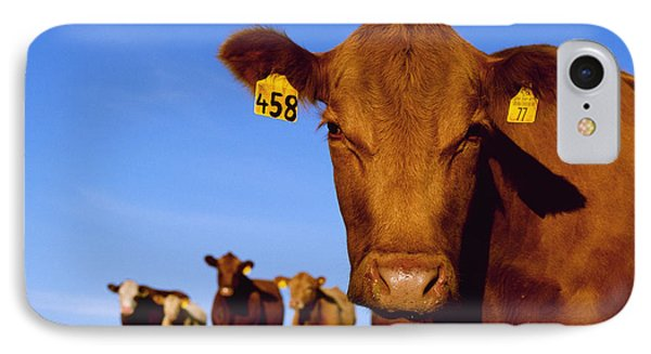 Livestock - Closeup Of A Red Angus Cow IPhone Case by Sam Wirzba