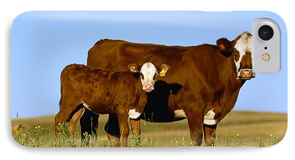 Livestock - Crossbred Cow And Calf IPhone Case by Sam Wirzba