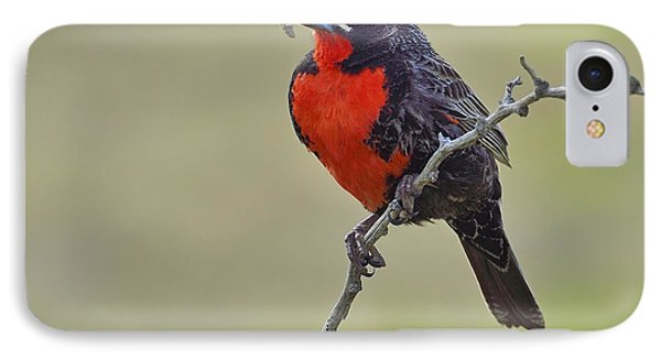 Long-tailed Meadowlark IPhone Case by Tony Beck