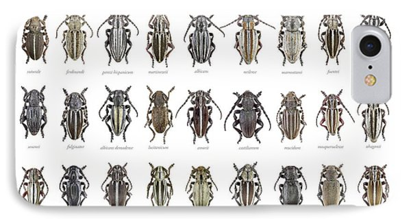 Longhorn Beetles IPhone Case by F. Martinez Clavel