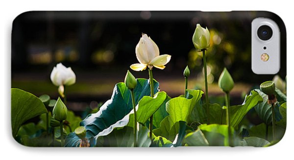 Lotuses In The Evening Light Phone Case by Jenny Rainbow