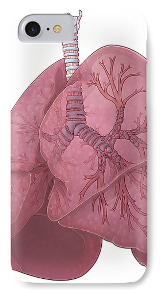 Lungs And Bronchi Phone Case by Evan Oto