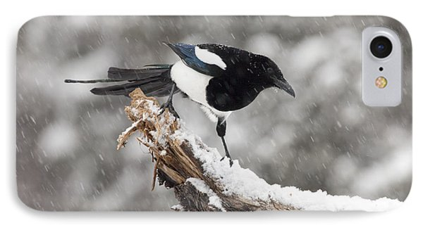 Magpie Out On A Branch IPhone 7 Case by Tim Grams